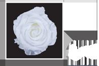 Flower Cube Bianco 5x5