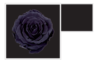 Flower Cube Nero 5x5