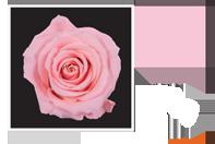 Flower Cube Rosa 5x5