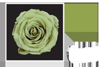Flower Cube Verde 5x5