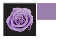 Flower Cube Viola 5x5